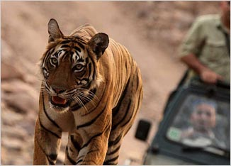 Golden Triangle and Ranthambore Tiger Tour package
