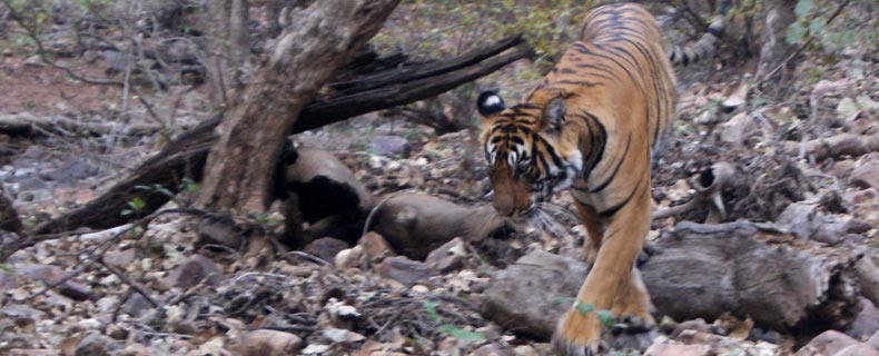 Ranthambore National Park Tour Package