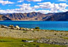Ladakh Ground Packages